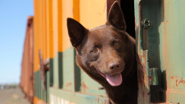 Australia's favourite pooch returns in the trailer for Koko: A Red Dog Story